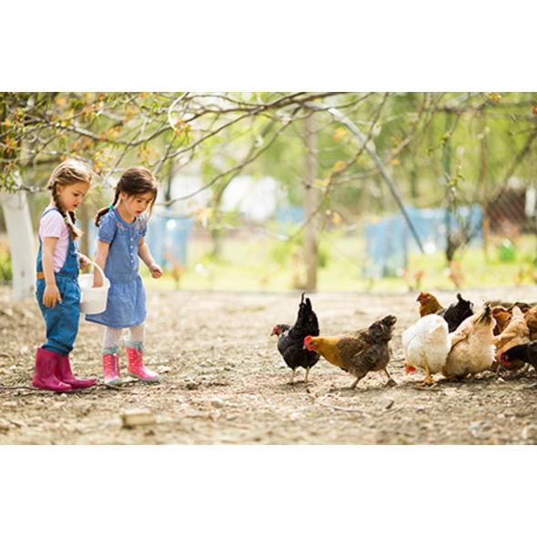 Kindertag am Bauernhof in Wiener Neustadt
